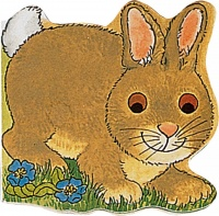 Cover image for Pocket Bunny